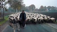 Die Herde unterwegs