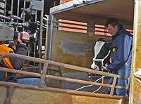 Conny Derboven beim Verladen der Kühe