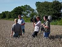 Johann Tjaden und Onno Gent begutachten den Weizen