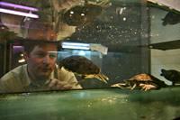 Dr. Florian Brandes beobachtet Schildkröten im Aquarium