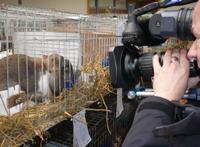 Kaninchen wird gefilmt