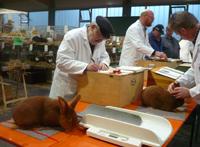 Kaninchenzüchter-Wettbewerb
