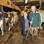 Landwirt Harm Groen ließ die Freundin des Postboten an die Euter seiner Kühe.