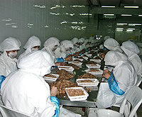 Frauen pulen in Marokko die Krabben aus der Nordsee
