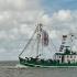 Ostfrieslands Krabbenfischer Vorschau