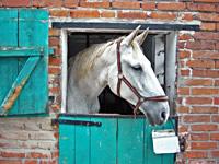 Das Pferd Dominic